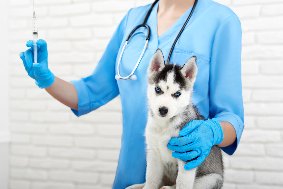 pet vaccination Dubai